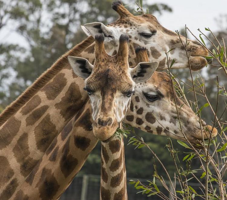 Mogo Zoo, South Coast attractions